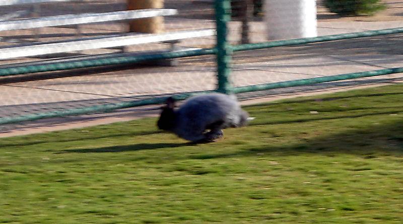 Albert running