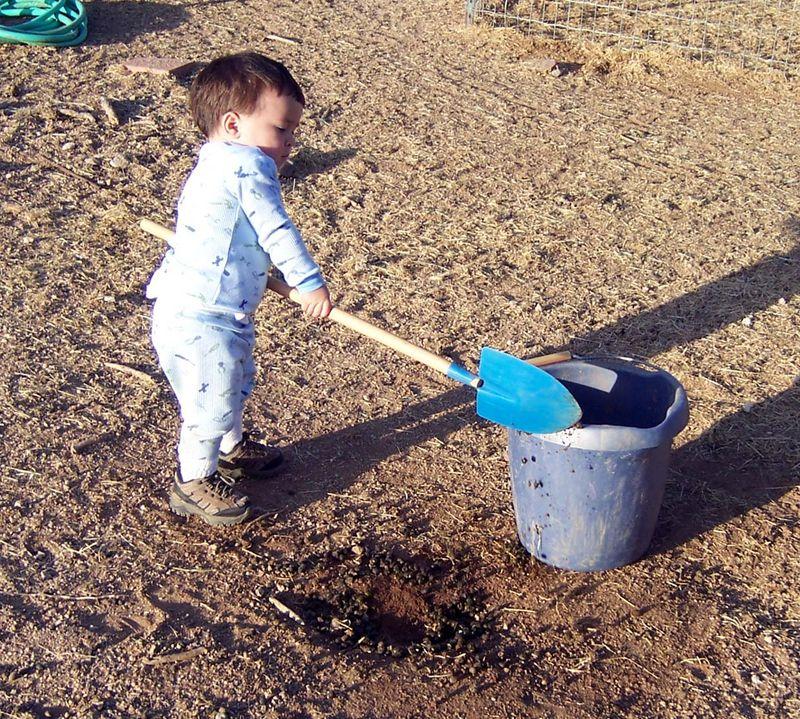 Poop scooping2