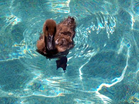 Magic_swimming1