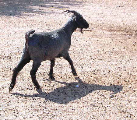 Skipping_bill