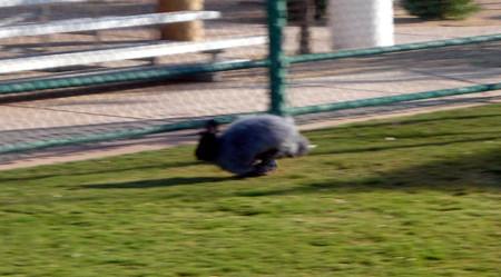 Albert_running