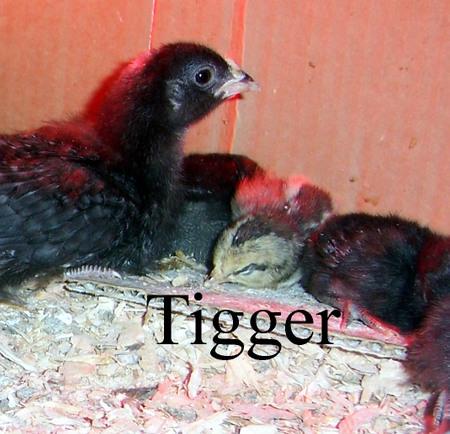 Tigger