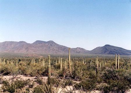 Sonoran1