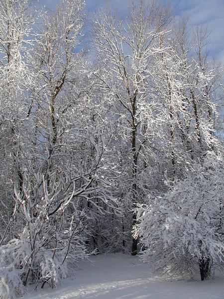 Snowysunrise