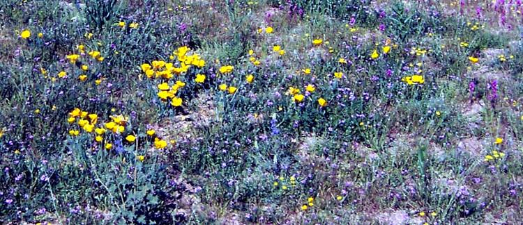 Wildflowers2_2
