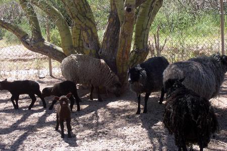 Katie_and_herd